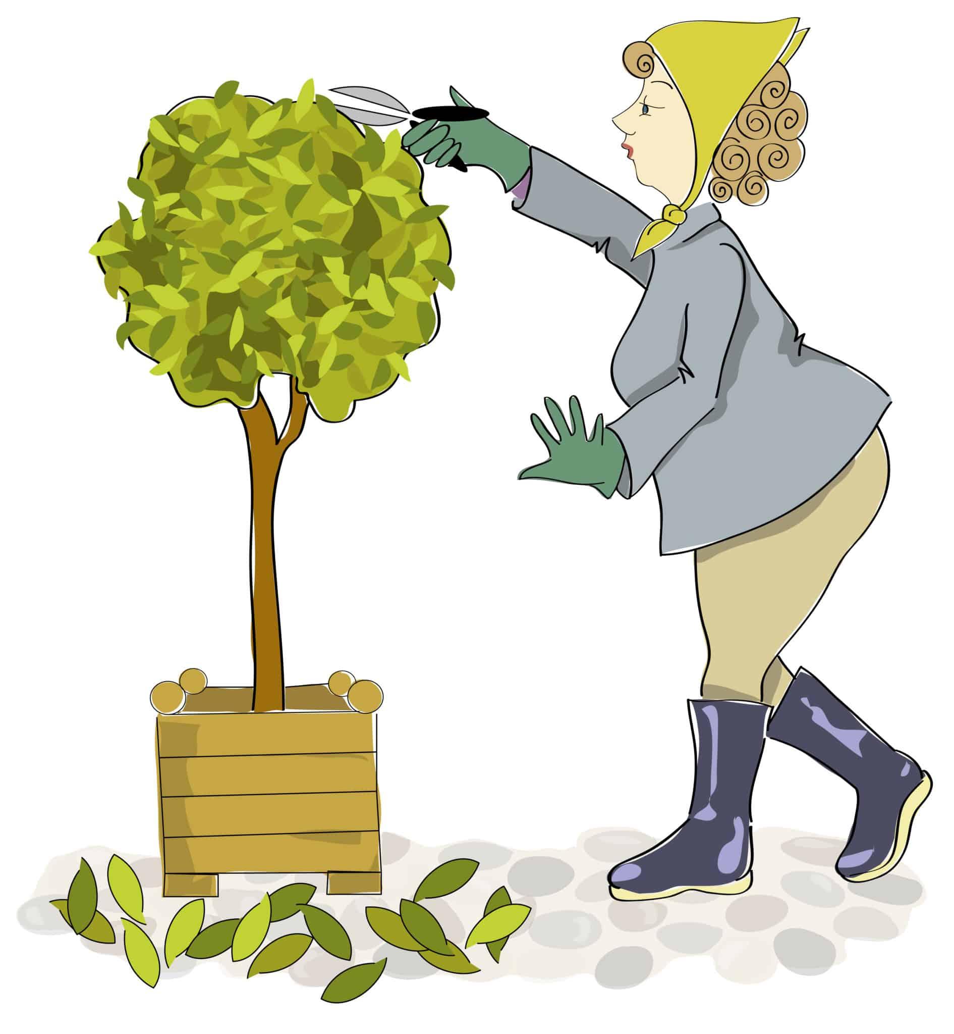 Read more about the article Du propriétaire ou du locataire, qui doit élaguer les arbres ?