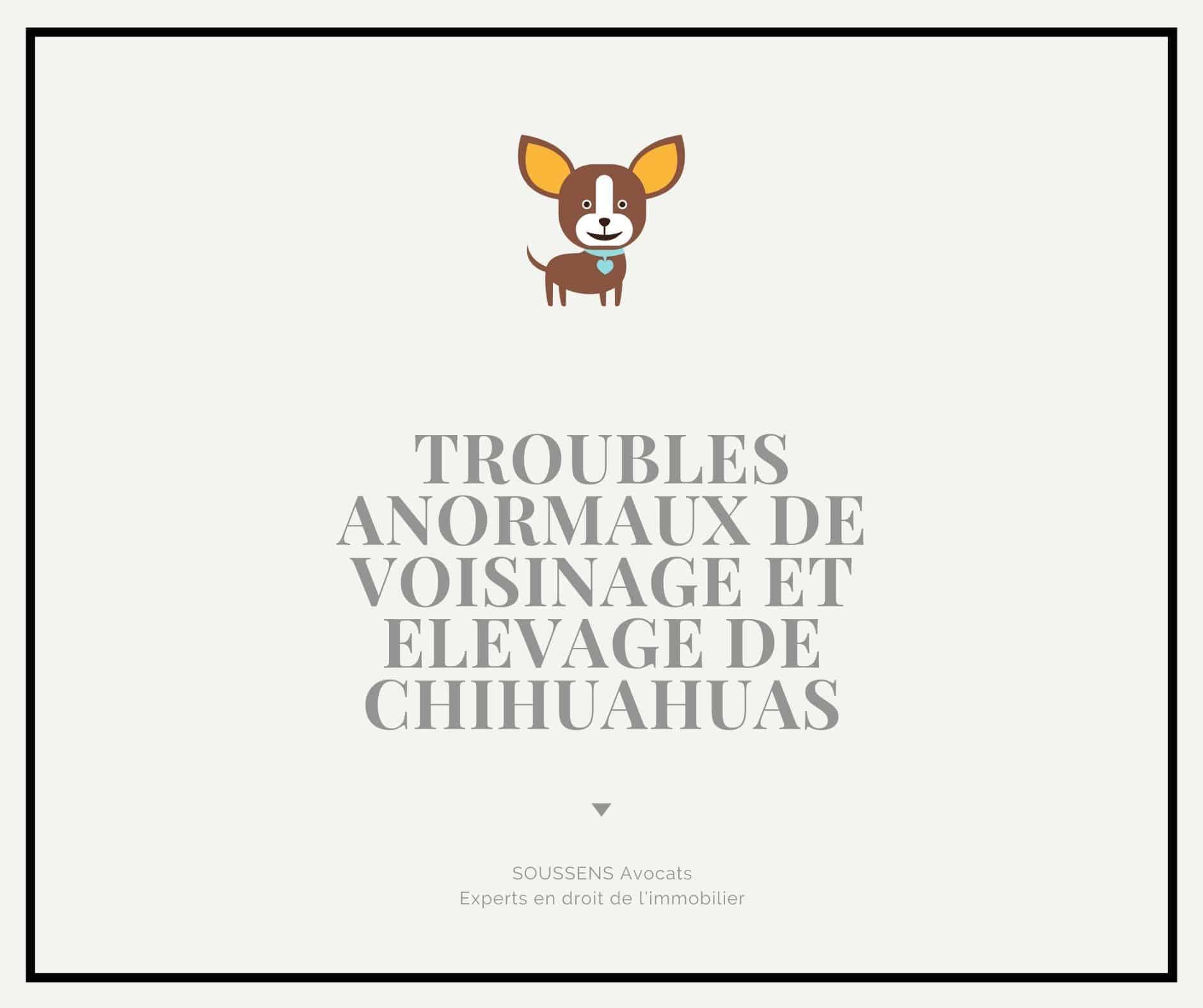 Read more about the article Elevage de chihuahuas : quand le voisinage ne l'entend pas de cette oreille